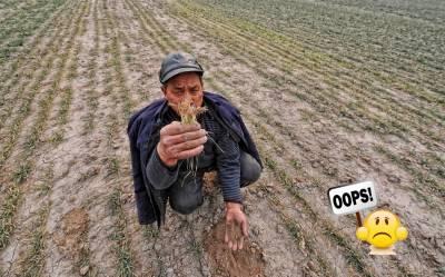 Ошибки агронома